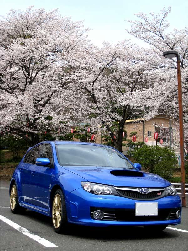 Sakurajinja1