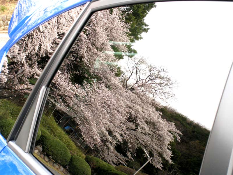 Sakurajinja2